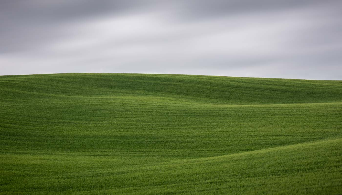 green wheat with waves and moving clouds in Tuscany in spring