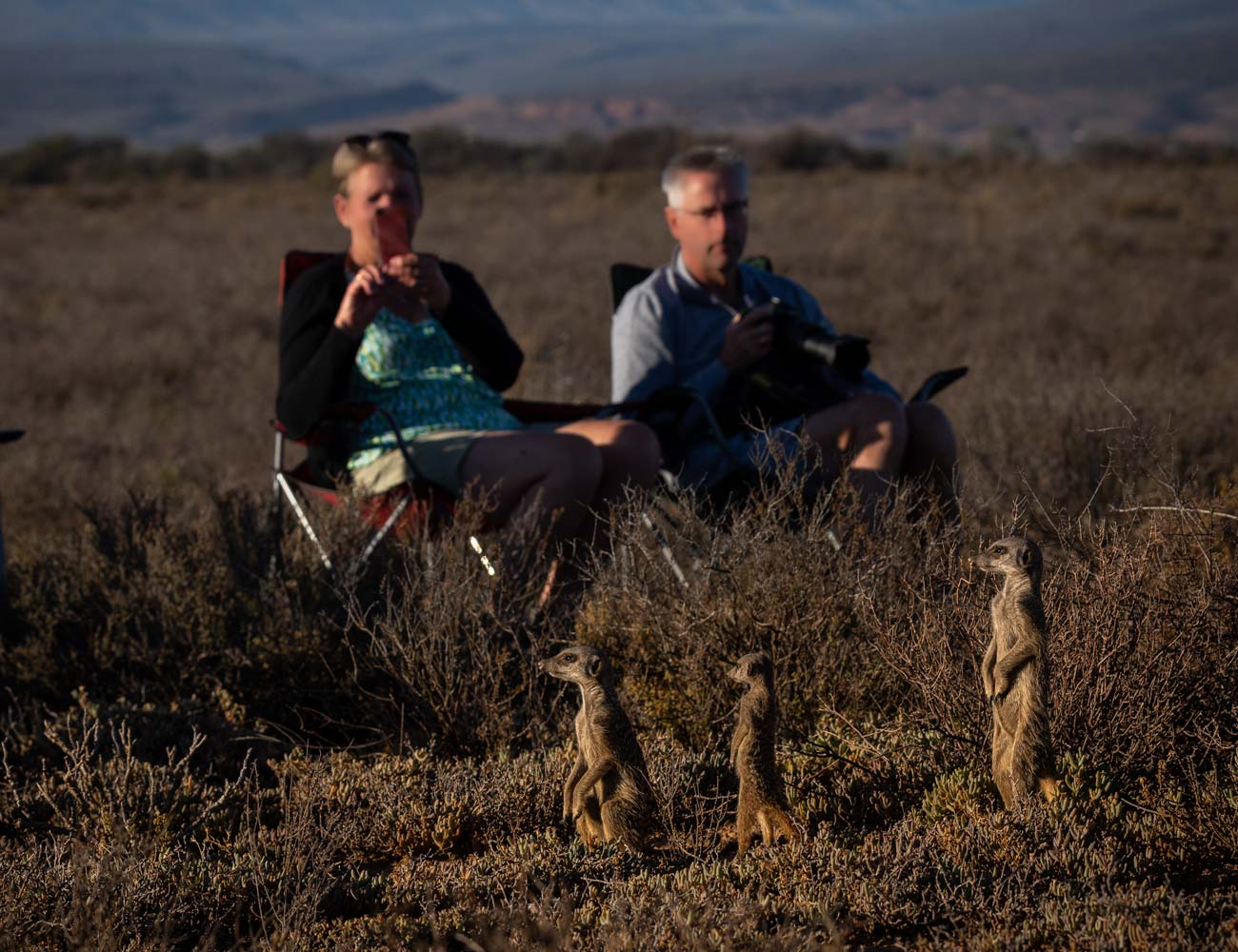 people sitting in chairs while meerkats get closer and curious
