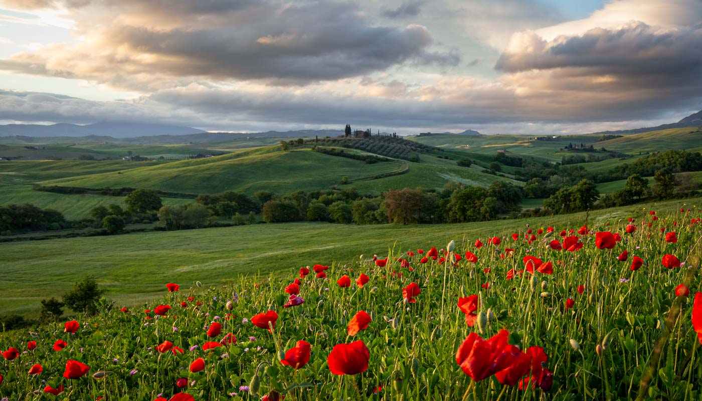 Podere just before sunrise with red poppies in the foreground