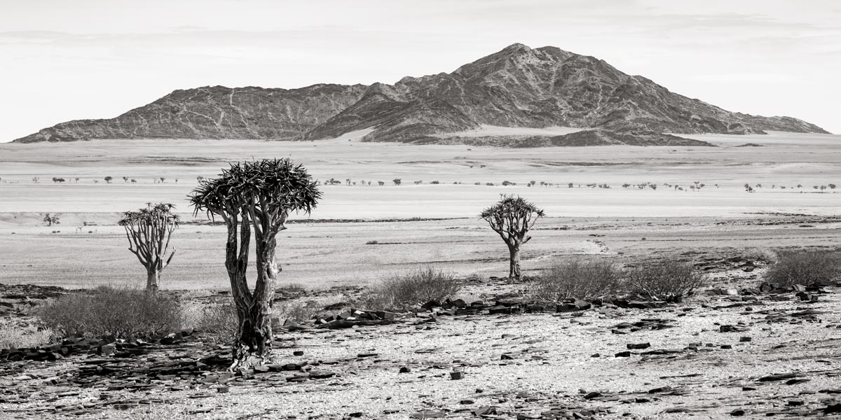 quiver trees with mountain in monochrome