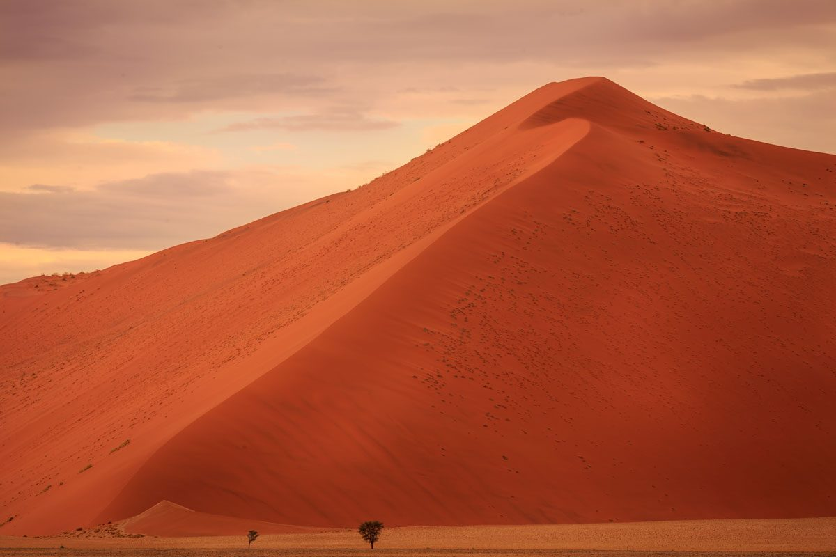 Huge red dune in Sossusvlei with trees in the foreground