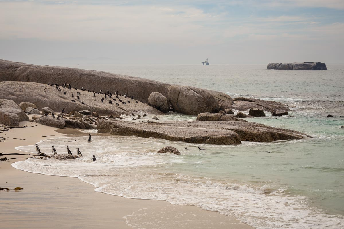 View on Boulder beach with the penguins resting on the beach and the rocks
